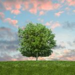 13 Accounting Organizations Aim for Global Net-Zero Carbon